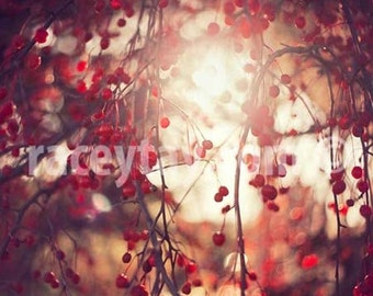 Red Berries Print - Nature photography, Pink Red, Pale Yellow, Romantic Bedroom Wall Art Print