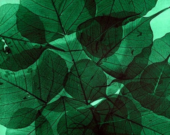 Nature Photography - Emerald Green Skeletal Leaves Fine Art Print - home decor - nature prints wall decor