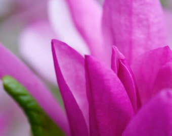 Spring Flowers, Set of 2, High-Res Photo Download