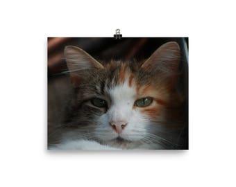 Callie, Calico cat, Cat wall art, Cat print
