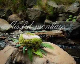 Moss and Fern Nest on Stream
