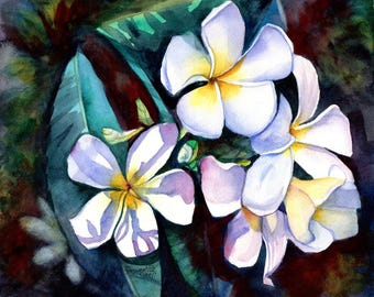 Kauai Plumeria print 8x10 from Kauai Hawaii Evening Plumeria