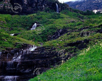 Beargrass In Bloom - Mountainside Flowers and Waterfall Cascade - Photo Photography Picture Print