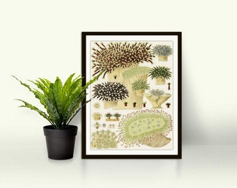Barrier reef ,coral,colourful coral,seaweed illustration,watercolour coral,sea life,digital prints,ocean prints,coral art