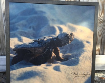 HEADING HOME Sea Turtle Hatchling Photography on Wood