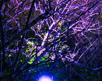 Night Time Tree Wall Art, Photography