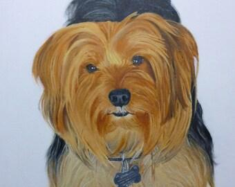 Yorkie Pet Portrait Original Oil paintng 16 x 20 inch canvas by Pigatopia