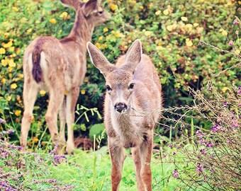 Wildlife Photography, Wild Fawn, Fawn Print, Deer Print, Woodland Print, Nature Prints, Nature Lover Gift, Wildlife Art, Nature Wall Art