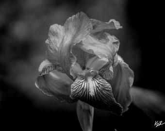 Black and white prints, digital photography, digital print, wall decor, fine art, flower