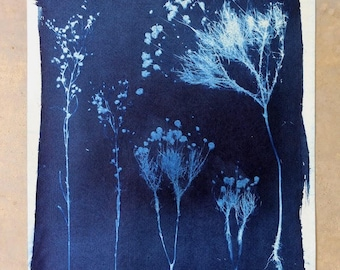 """Bitterweed//Wildflower Cyanotype, 14x16"""""""