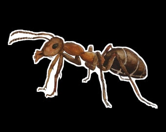 Hand-Painted Ant Sticker
