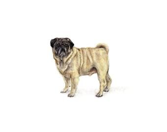 Breeds: Pug (print)