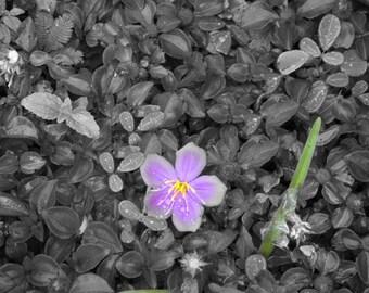 Flower Hug. Fine Art Photography.