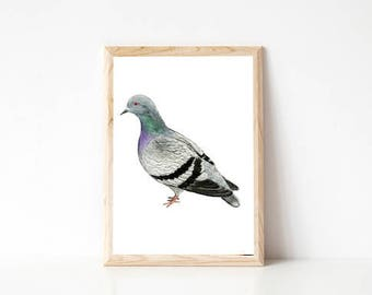 Pigeon watercolour illustration, Urban pigeon print, Bird wall art, Bird watercolour print, pen and watercolour pigeon print, A4 bird print