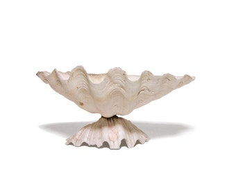 Clam shell pedestal bowl