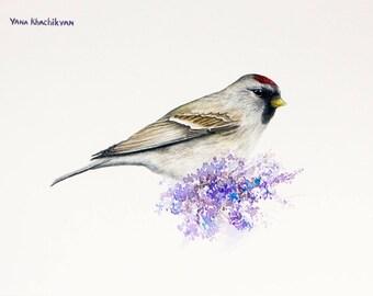 Redpoll Bird Original Watercolor Painting by Yana Khachikyan