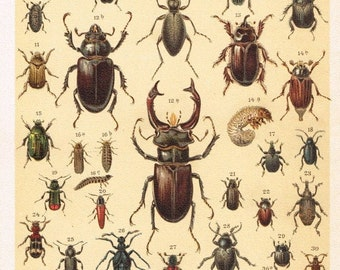 1885 Antique Print - Beetles, Coleoptera, Bugs, Entomology, Insects- F.Martin