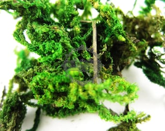 12gram real dry preserved dyed green lichen moss for DIY glass dome filling 1503005