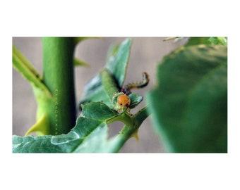 ArtSoOFresh Caterpillar Face photo, instant download