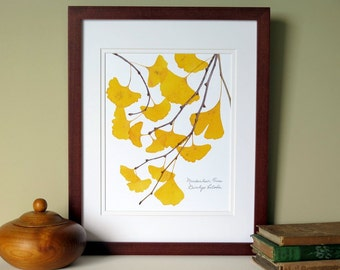Pressed Ginkgo leaves print, 11x14 double matted, Ginkgo tree leaves, golden, yellow, wall decor art no. 0099