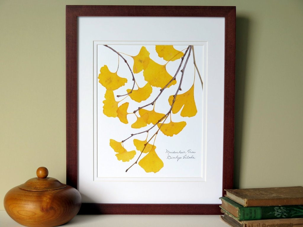 Pressed Ginkgo leaves print 11x14 double matted Ginkgo tree