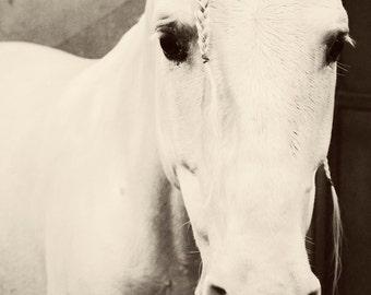 Horse Photograph - fine art print - 8x10 photograph - white horse portrait - braided - nursery room - fantasy - romantic - home decor