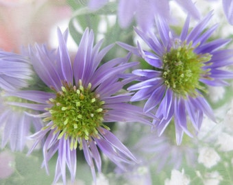 Purple and Green Digital Photograph, Purple Asters, Summer Florals