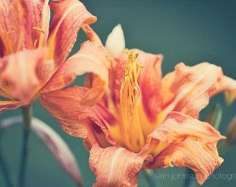 flower photography, orange home decor, nature photography, floral photography, orange wall art, Double Daylily II