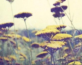 Botanical photography print wildflower mustard yellow sage plum wall art - Indian Summer