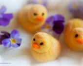 Chick, wool fairy tale in...