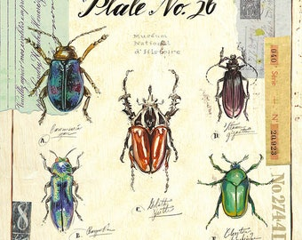 Beetle Print, Insect Print, Beetle Illustration, Insect Illustration, Bug Illustration