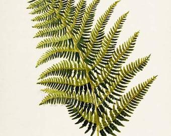 Bracken Fern Art Print, Botanical Art Print, Fern Wall Art, Fern Print, Botanical Print, green art print