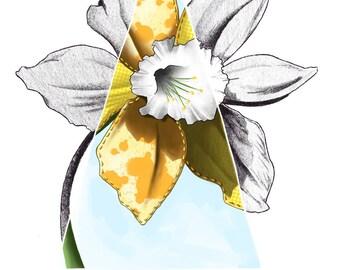 Daydreaming of Daffodils