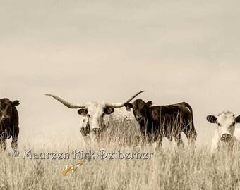 Cow art for the wall longhorn wall art wall décor home décor photo Longhorn photography Texas Longhorn cow and calves southwestern farm