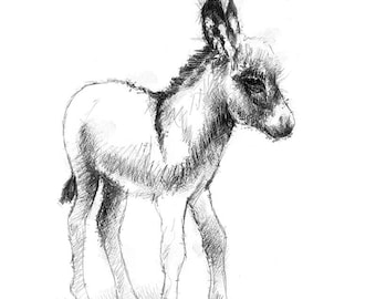 Baby donkey | Limited edition fine art print from original drawing. Free shipping.