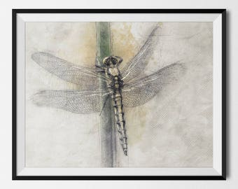 Dragonfly, Dragonfly Printable, Dragonfly Print, Dragonfly Poster, Insects, Gift For Biologist,Insect Biologist,Entomology, INSTANT DOWNLOAD