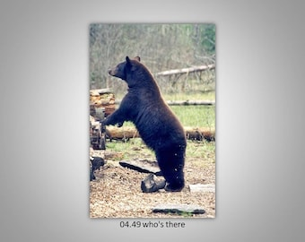 04.49 Black Bear Limited Edition, Signed and Numbered 8x12 Images