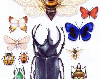 Insect collection detail CARD. Blank.