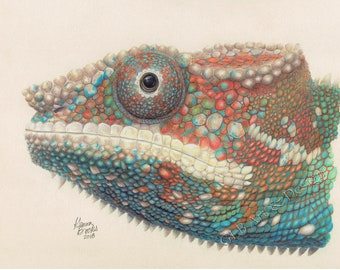 Chameleon drawing, chameleon print, chameleon wall art, colorful animal prints, colorful animal art, reptile decor, nursery decor, chameleon