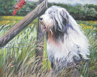 Bearded collie portrait DOG ART canvas PRINT LAShepard painting 12x12""