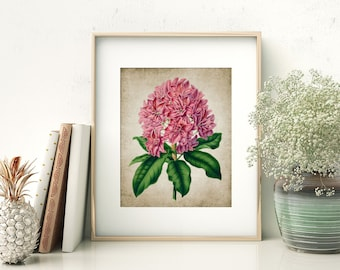 Rhododendron Print - Rhododendron Illustration - Rhododendron Art - Digital Art - Printable Art - Single Print #52 - INSTANT DOWNLOAD