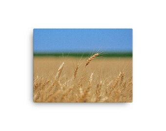 12x16 LowBeeTees Kansas Wheat Head Canvas