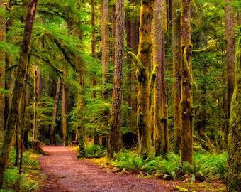 Forest Trail Landscape Photographic Fine Art