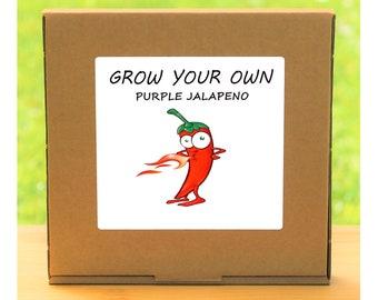 Unusual Windowsill Gardening Gift - Grow Your Own Purple Jalapeno Hot Chilli Plant Kit