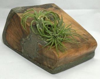 Wood planter reclaimed tree log
