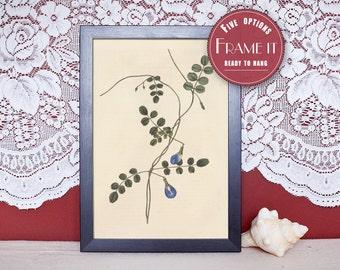 """Vintage illustration of Soft - Hooded-Flower - framed fine art print, flower art, home decor 8""""x10"""" ; 11""""x14"""", FREE SHIPPING - 118"""