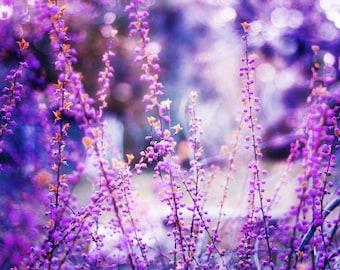 Flower Fine Art Photography Print, Large Botanical Wall Art Decor, Misty Pink & Purple Flowers- Lavender Glow