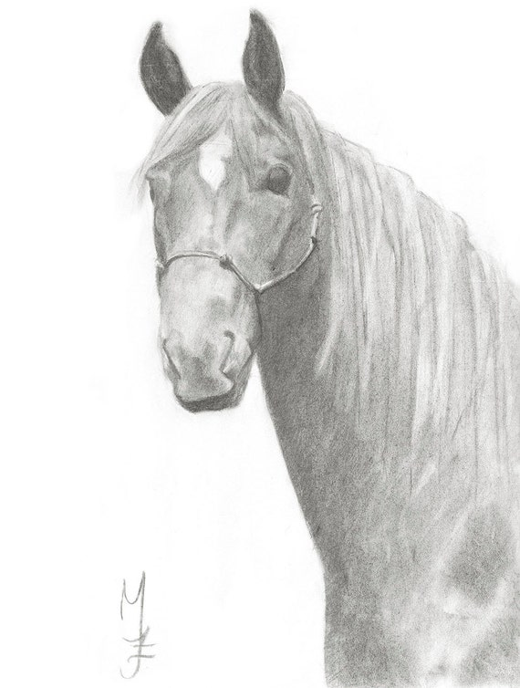 Horse Charcoal Drawing Portrait Black And White Art