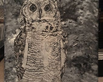 Owl: black and white