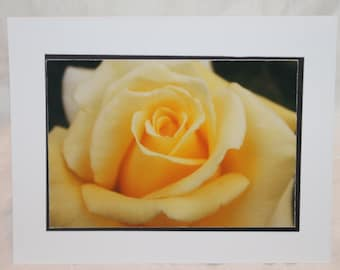photo card, yellow rose, photography